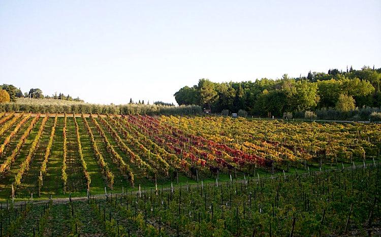 Wine tasting in Arezzo