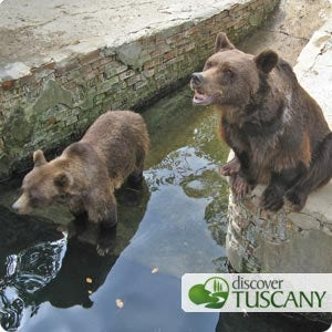 Brown Bears at the Poppi Zoo asking to be fed treats