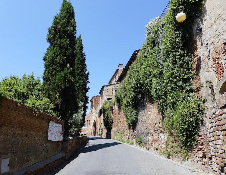 Road to Certaldo in Tuscany