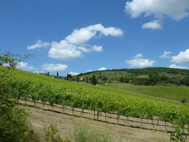 Degustazione di vini a Badia Passignano
