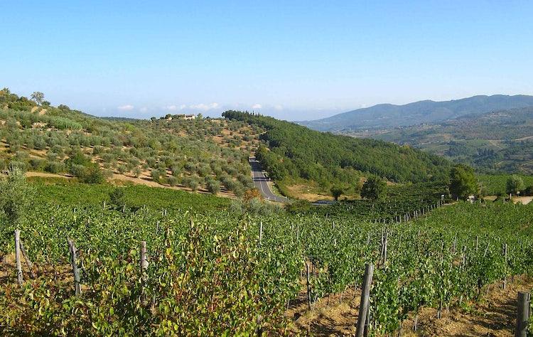 Chianti Summer Landscape