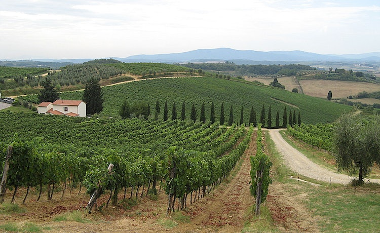 vineyards around Poggibonsi