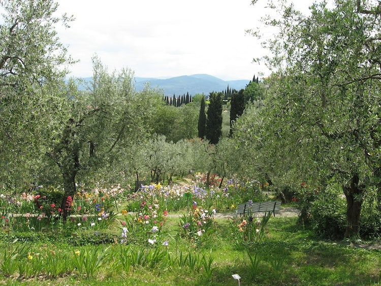Iris Garden: an outdoor visit while exploring Florence