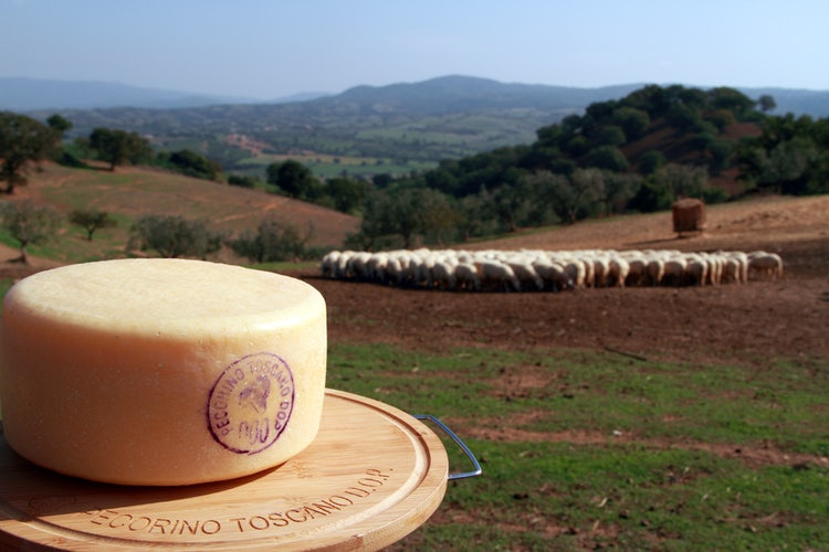 Pecorino Toscano DOP and its official mark