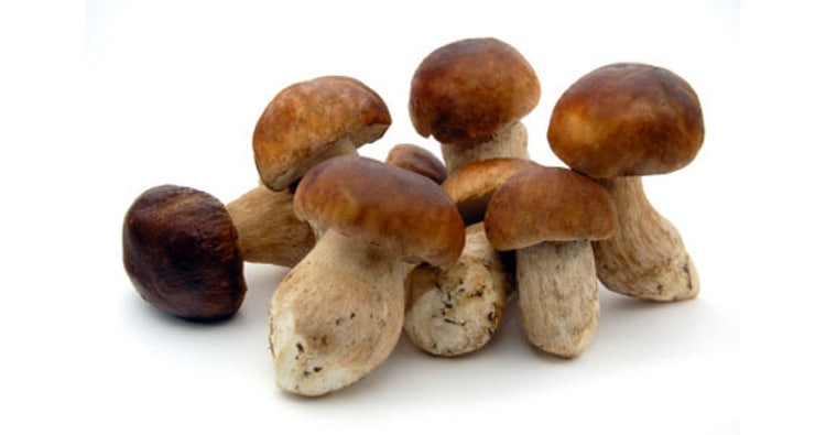 Flavorful Porcini mushrooms from Casentino Valley