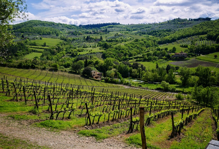 Chianti in SUmmer, a tour to see it all