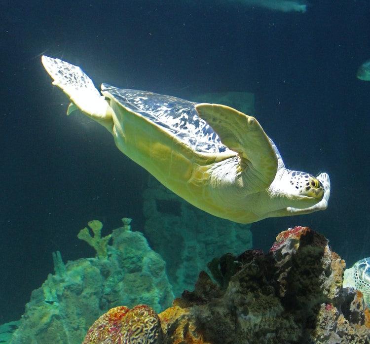 L 39 acquario di livorno una visita all 39 acquario di livorno for Acquario per tartarughe piccole