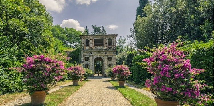 Villa Reale in Marlia, Lucca: Camellias in bloom
