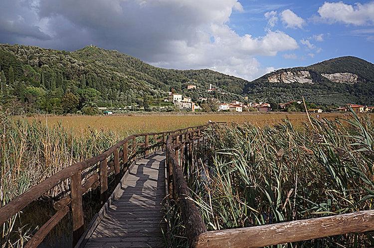 board walks at Massaciuccoli