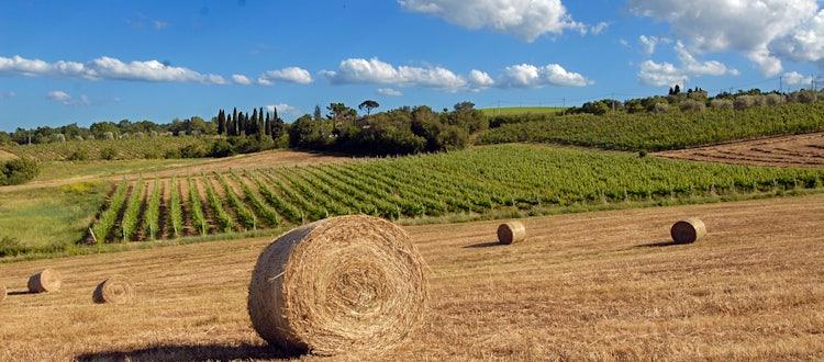 Vineyards di Fanetti in Montepulciano