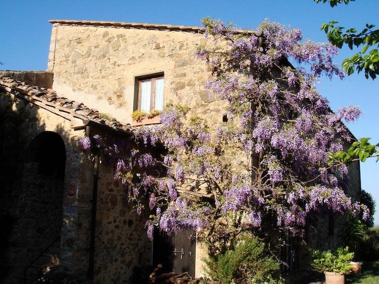 Podere Patrignone wisteria-covered vacation villa in Castellina in Chianti :: Discover Tuscany
