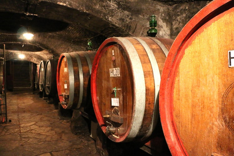 Wine tasting near Florence, Italy: top winter tours
