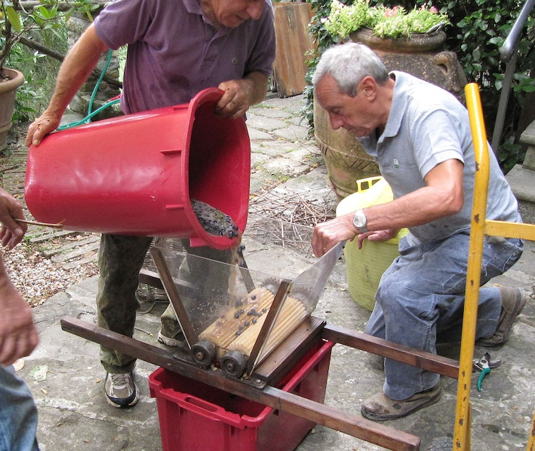 Pressing the grapes in Tuscany